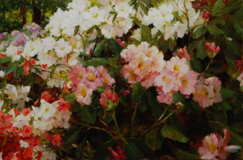 Rhododendron and Azalea, oil on canvas, 16 x 24 inches  SOLD