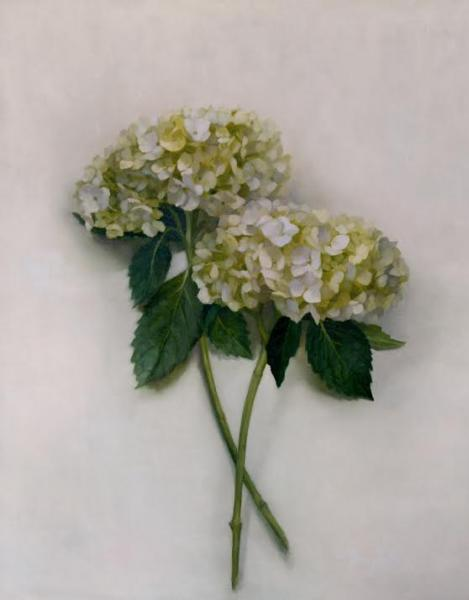 White Hydrangeas, oil on linen, 20 x 16 inches, $2,500