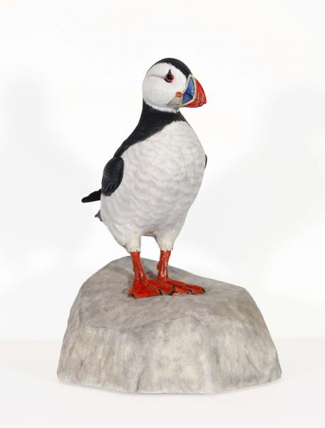 Atlantic Puffin, 1/2 Life Size, carved tupelo with oils, 8h x 3w x 7 d inches, $1,200