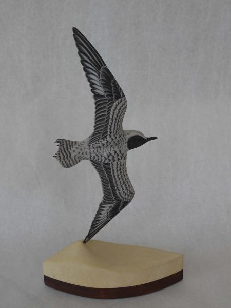 Black Bellied Plover in Flight , carved tupelo with oils,   SOLD
