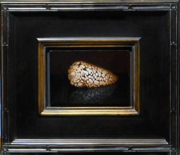 Conus Marmoreus , oil on linen panel, 4 x 6 inches, $900