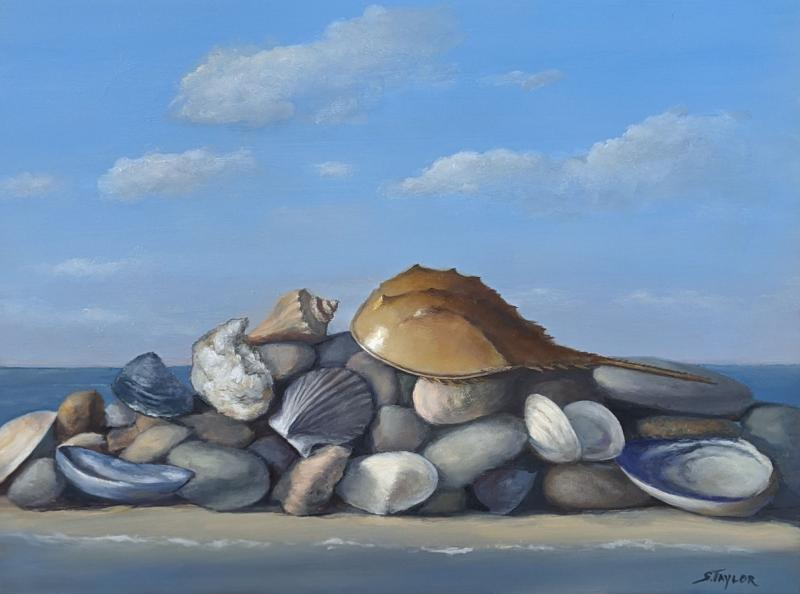 Seashell Distancing, oil on canvas, 12 x  16 inches, $1,500